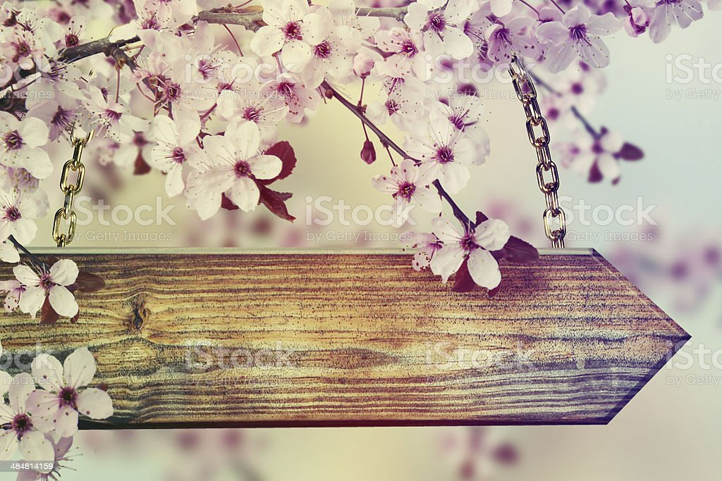 Wooden signboard on the pink tree flowers. stock photo