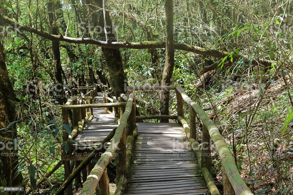 Wooden stair way to jungle among beautiful green foliage background at Doi Inthanon national park , Chiang Mai , Thailand. stock photo