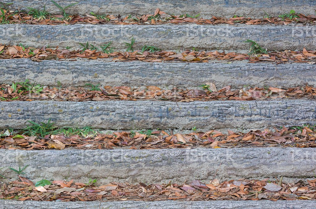 Wooden stairs with fall dry leaf. stock photo