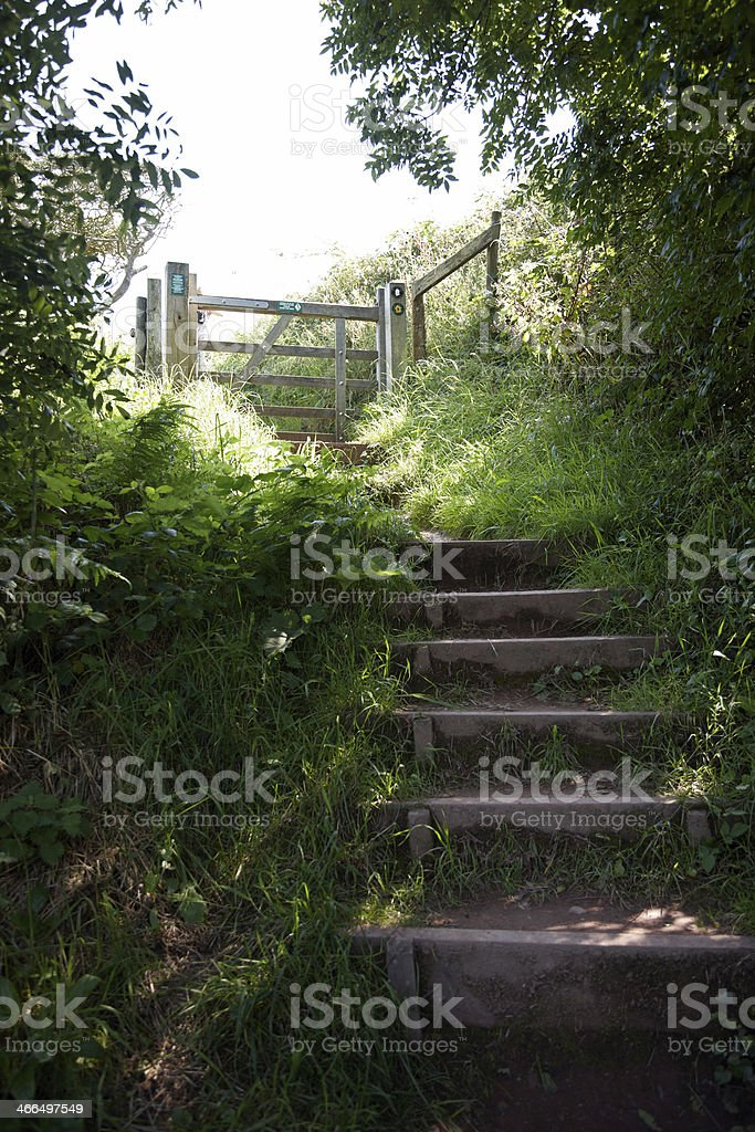 Wooden steps on Green shady woodland path royalty-free stock photo
