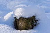 Wooden stump in snow