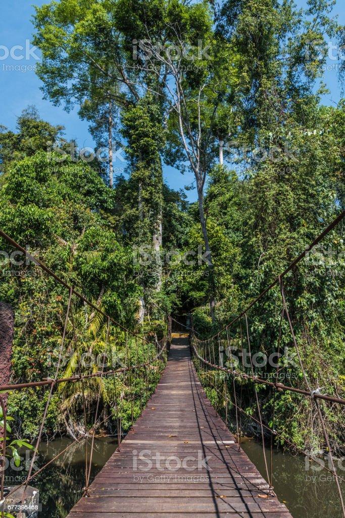 Wooden suspension bridge leading in tropical jungle_ stock photo