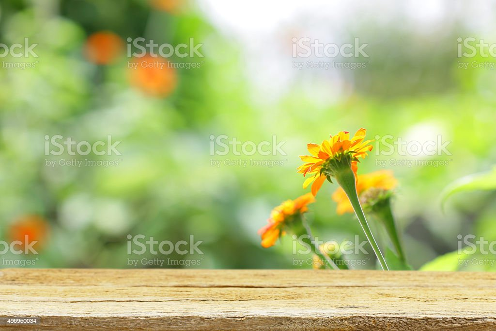 Wooden table with zinnia flower stock photo