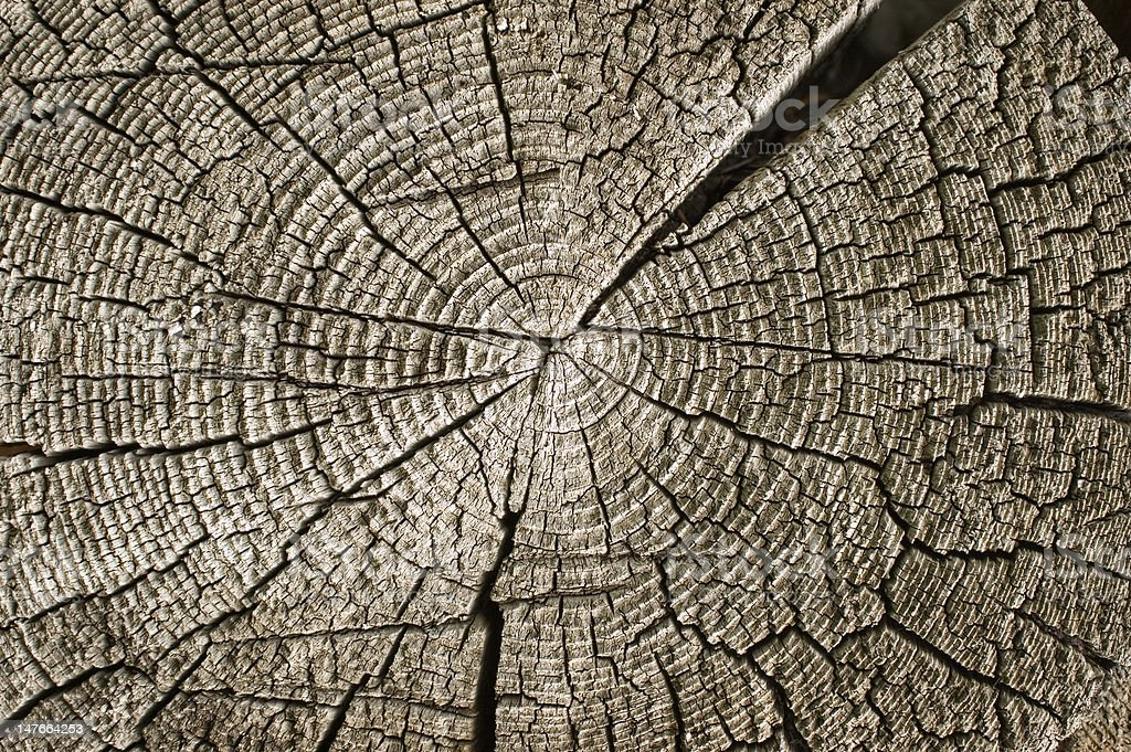 Wooden texture. royalty-free stock photo