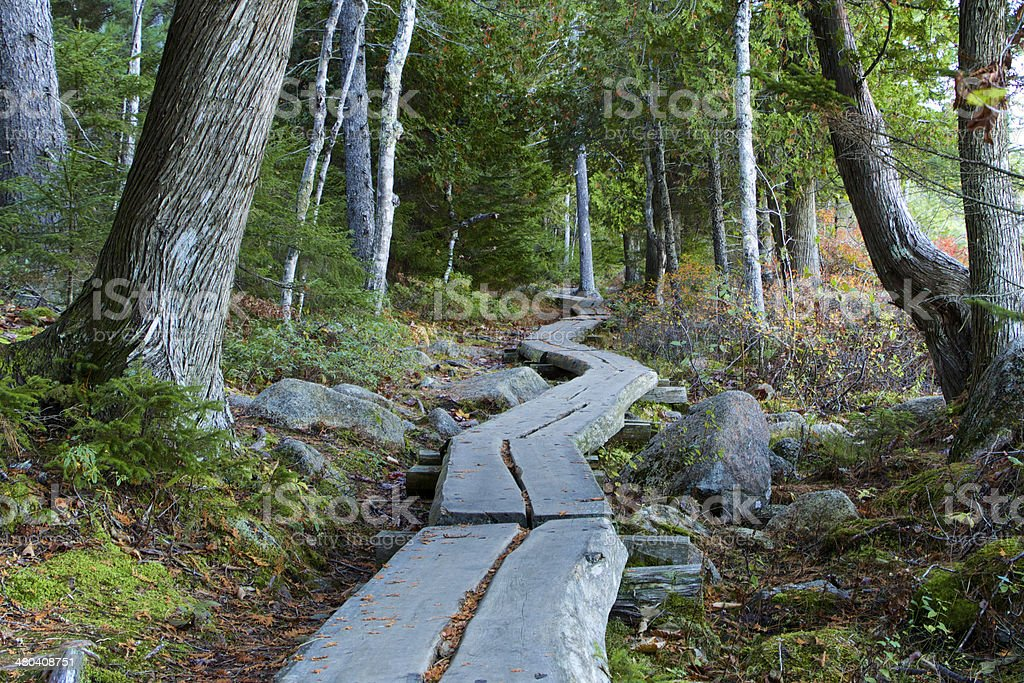 Wooden trail stock photo