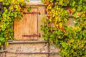 Wooden trapdoor and grape vines