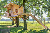 Wooden tree house in oak tree with grass