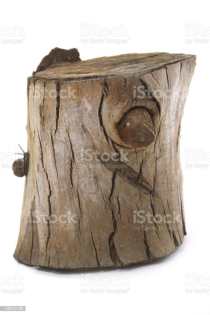 Wooden tree stump with snail royalty-free stock photo