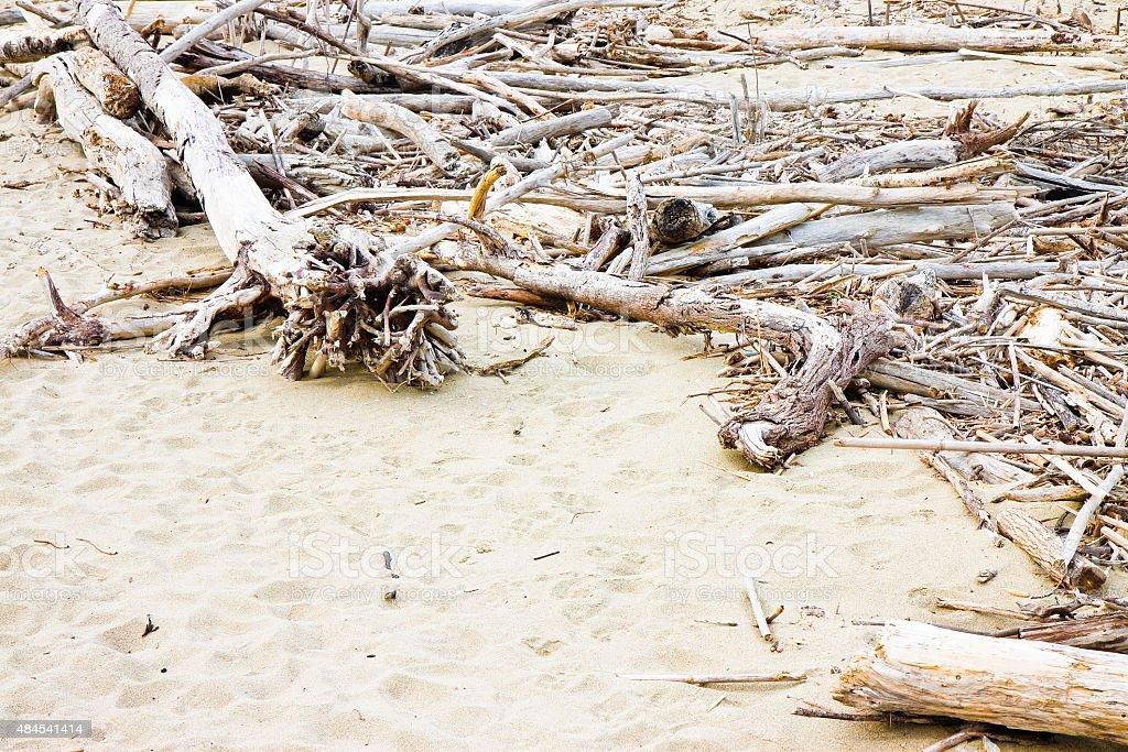 Wooden trunks on the seashore stock photo