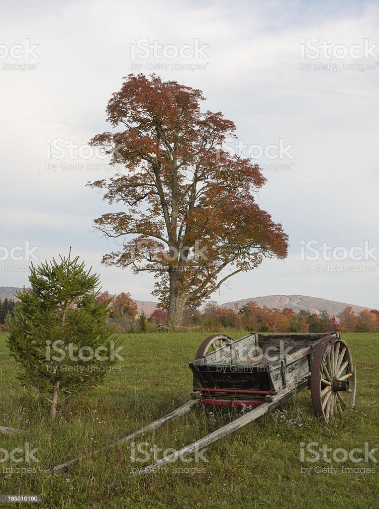 Wooden Wagon and Fall Tree stock photo