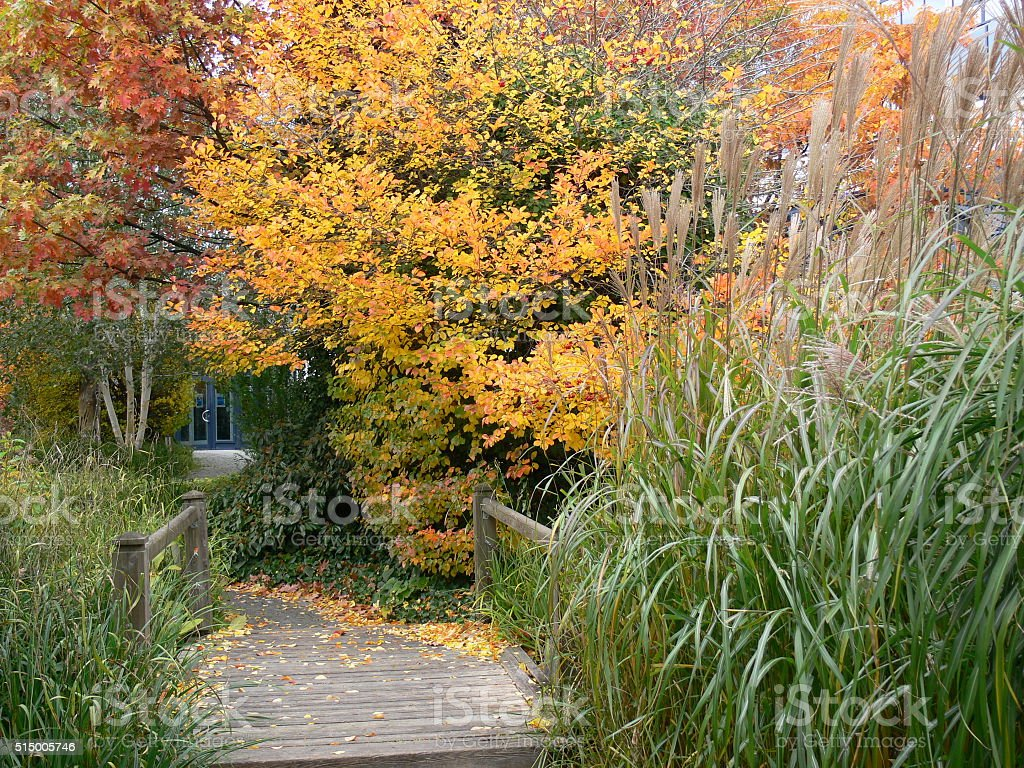 Holzsteg im Herbst stock photo