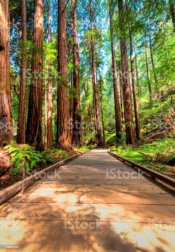 Wooden walking path through the forest stock photo