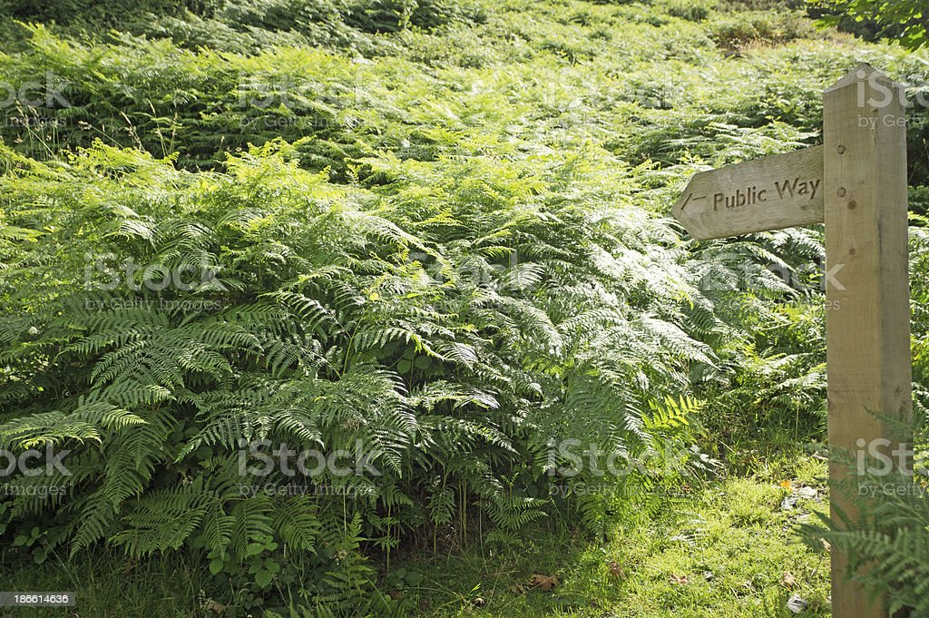 Wooden walking sign stock photo