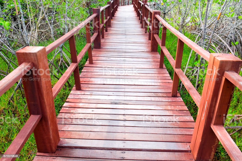 Wooden walkway bridge on field in mangrove forest located at Thailand stock photo