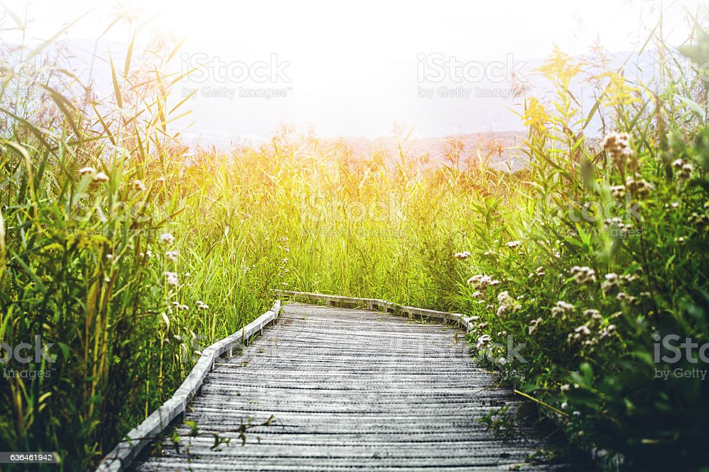 Wooden walkway footpath on stilts swamp bright sunlight in summer stock photo