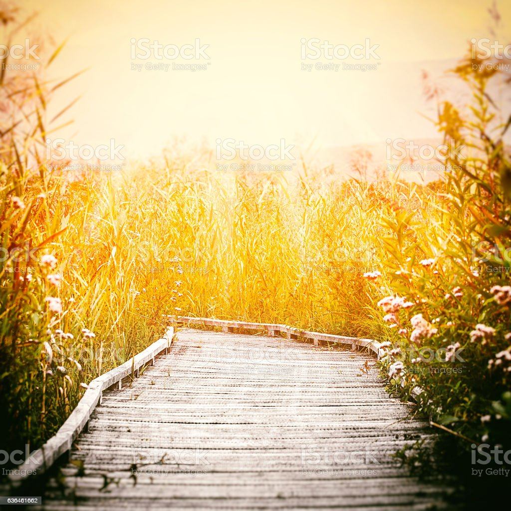 Wooden walkway footpath on stilts swamp by sunset in autumn stock photo