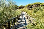 Wooden walkway in Bolonia beach.