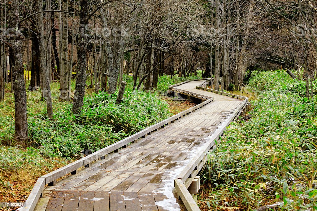 wooden walkway in forest royalty-free stock photo