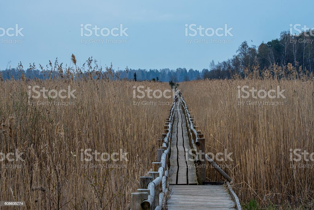 Wooden Walkway into the Wetlands stock photo