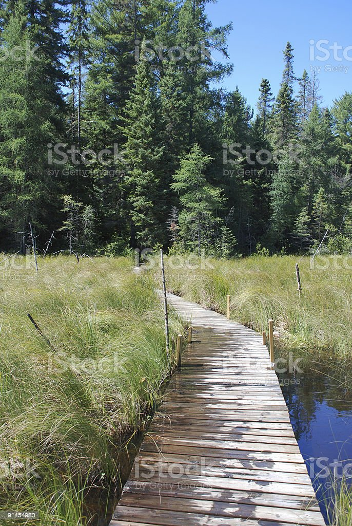 Wooden walkway leading to a forest trail royalty-free stock photo