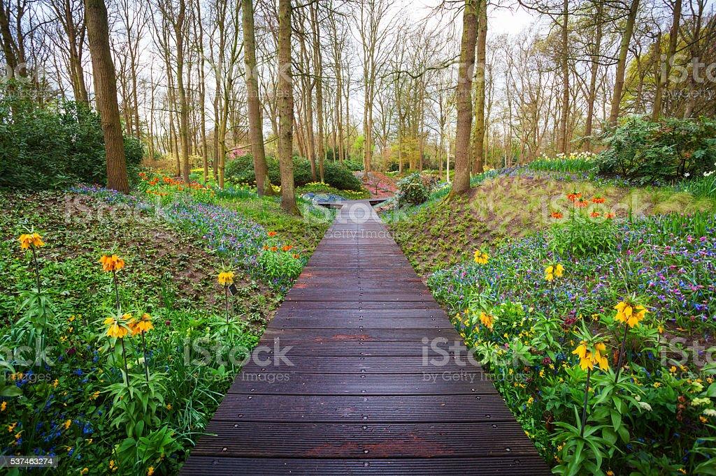 Wooden walkway through the Keukenhof park in Netherlands stock photo