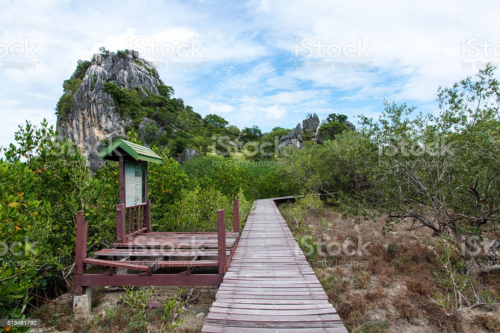 Wooden walkway to study nature stock photo