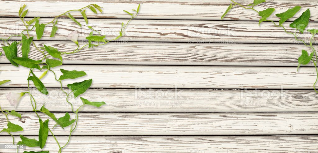Wooden wall and  bindweed twigs with leaves and flowers stock photo