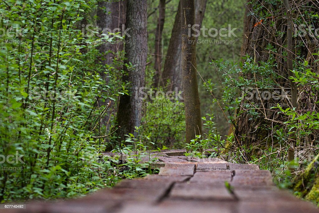 Wooden way stock photo
