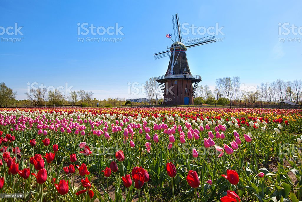 Wooden Windmill in Holland Michigan stock photo