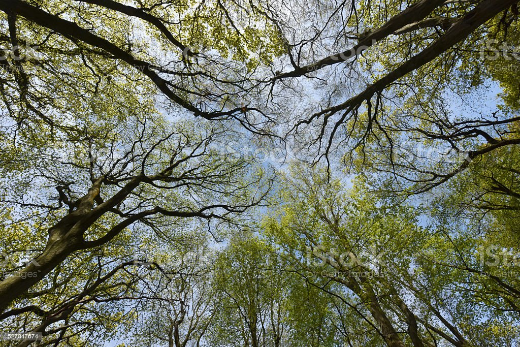Woodland Canopy stock photo