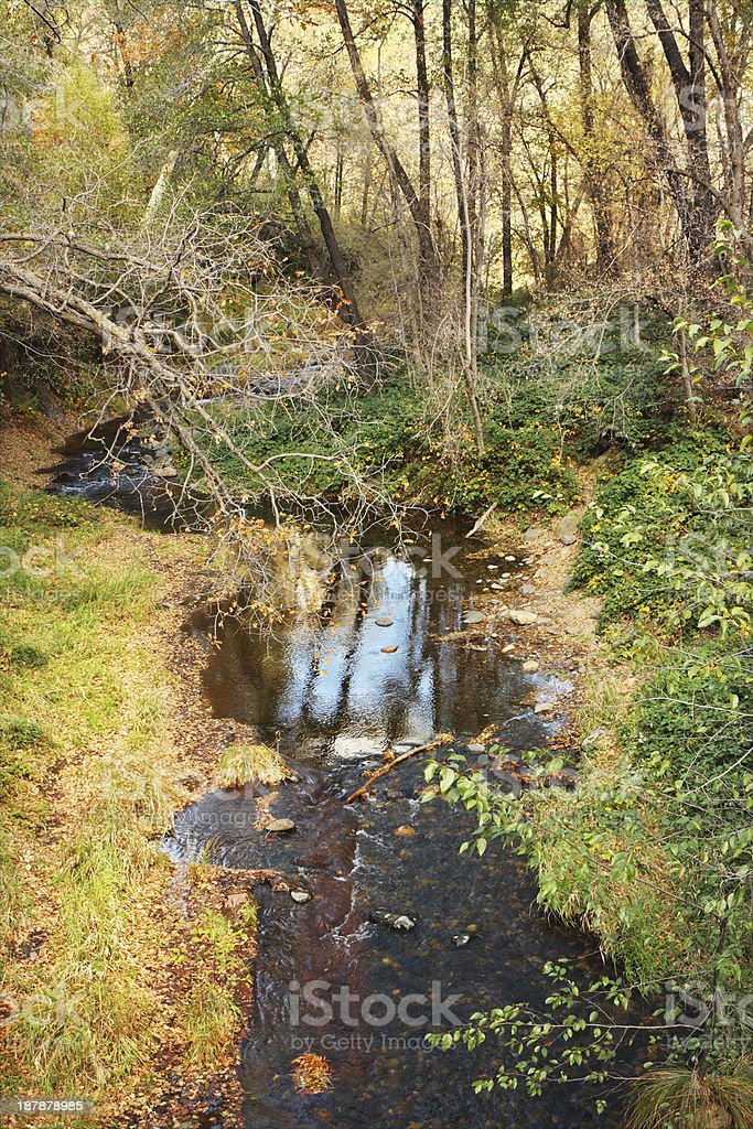 Woodland Creek Wilderness Watercourse royalty-free stock photo