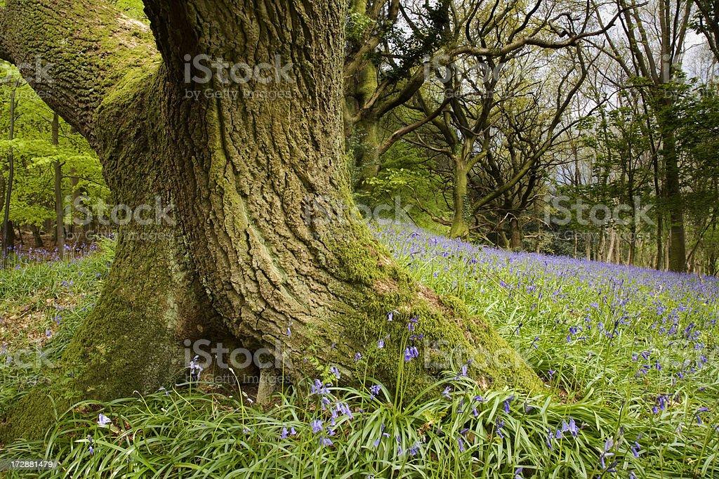 Woodland Detail royalty-free stock photo