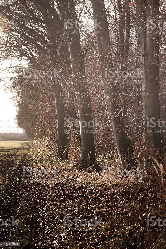 Waldrand stock photo