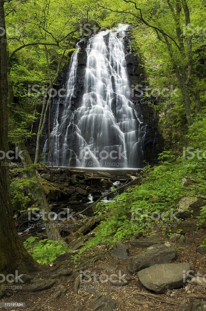 Woodland Falls royalty-free stock photo