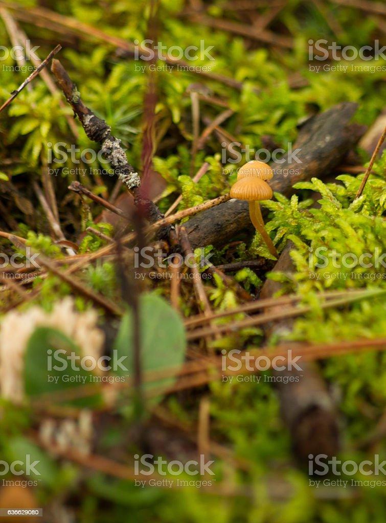 woodland floor stock photo