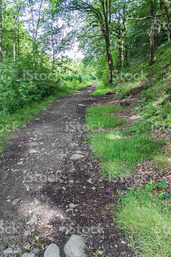 Woodland Footpath stock photo
