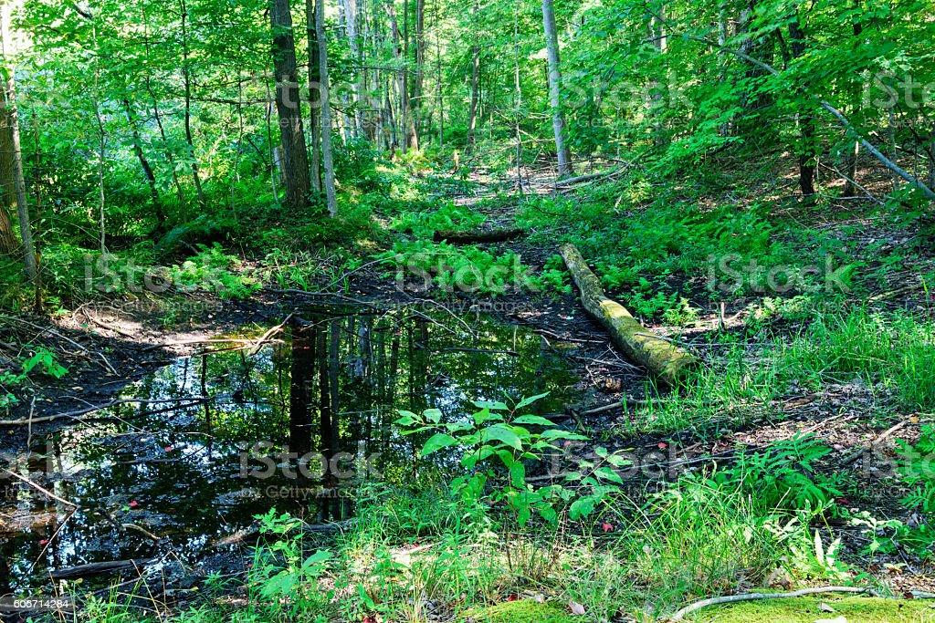 Woodland in Saugatuck Dunes State Park, Michigan stock photo