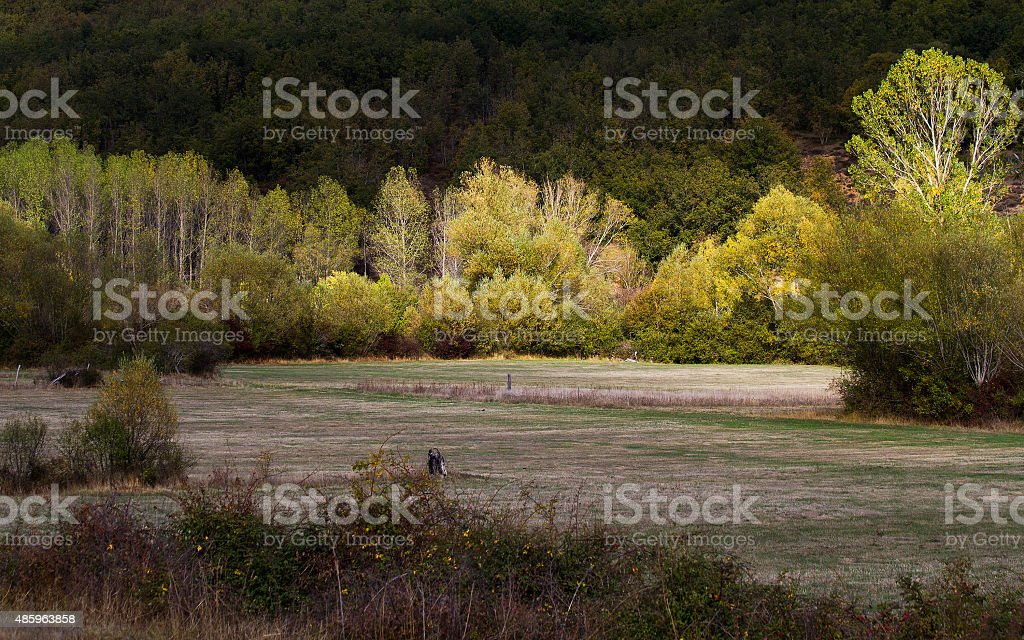 Woodland Meadows with illuminated by a ray of sunshine autumn stock photo