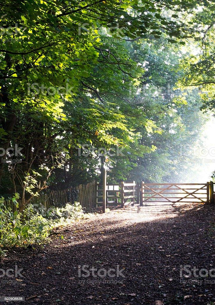 Woodland Mist stock photo