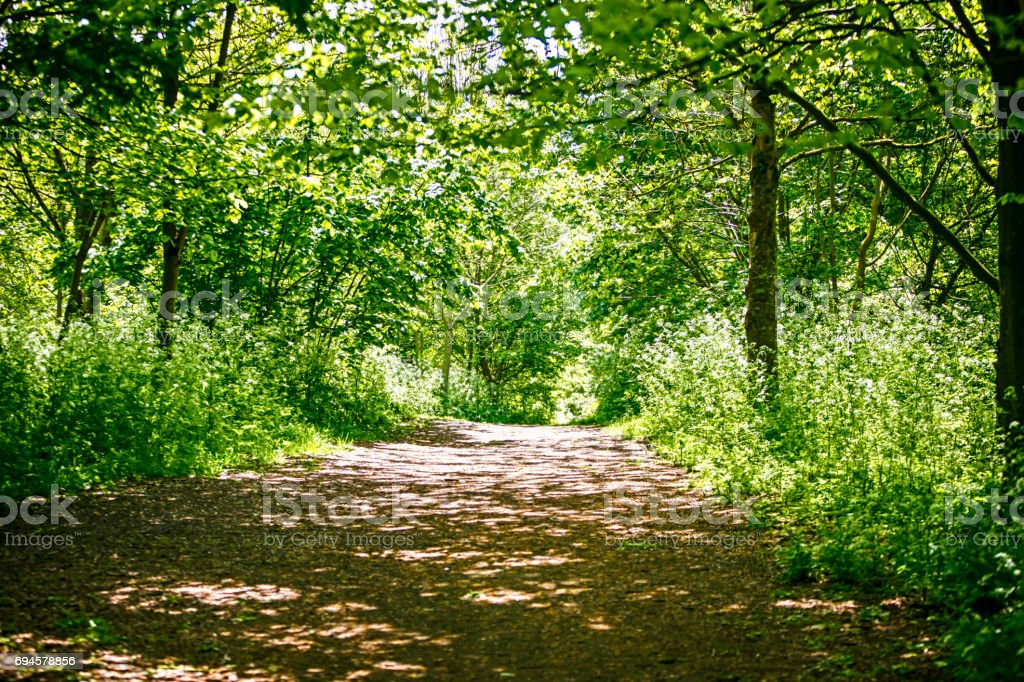 Woodland nature trail in a forest in England UK stock photo