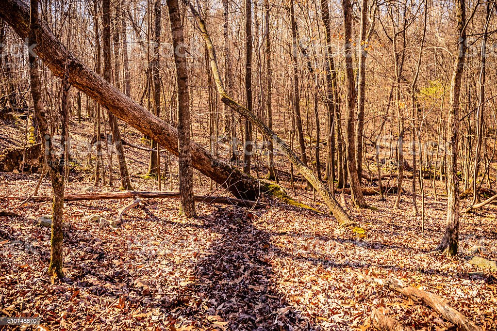Woodland of the Eno River State Park stock photo
