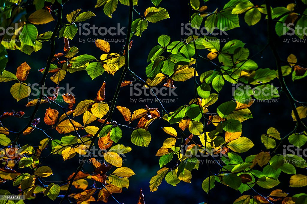 woodland stock photo
