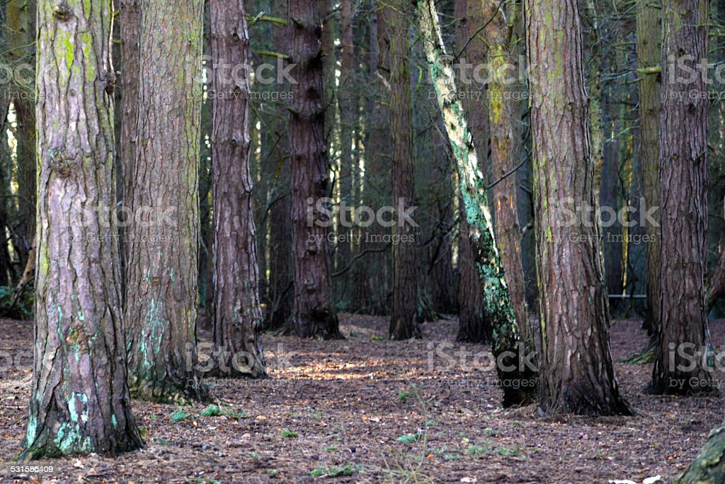 Woodland photo libre de droits