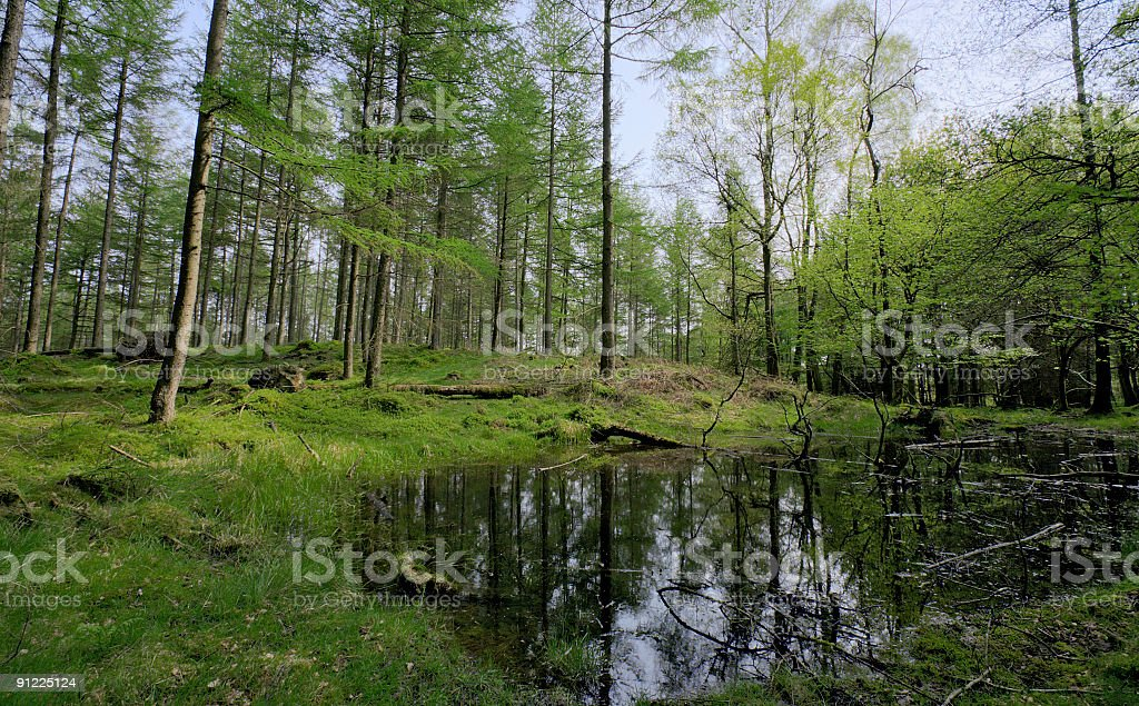 Woodland Pond royalty-free stock photo