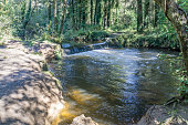 Woodland river scene