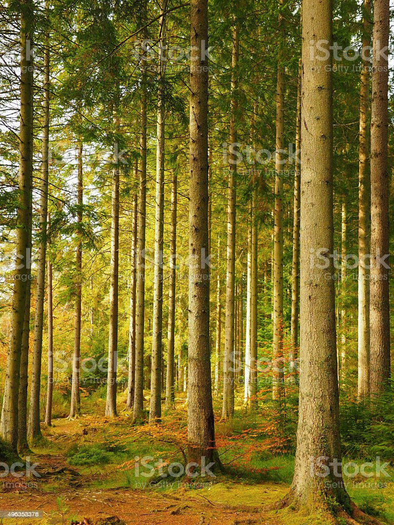 Woodland scene at autumn. stock photo