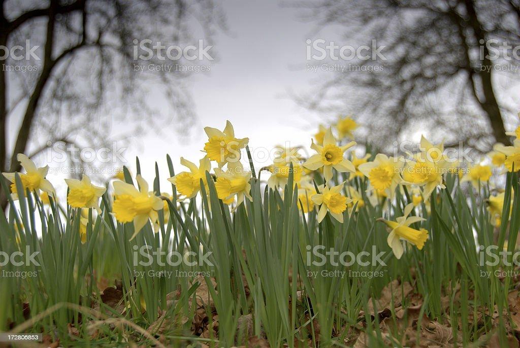 Woodland Scene royalty-free stock photo