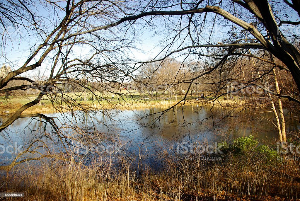 woodland - serene lake view through dry tree branches stock photo