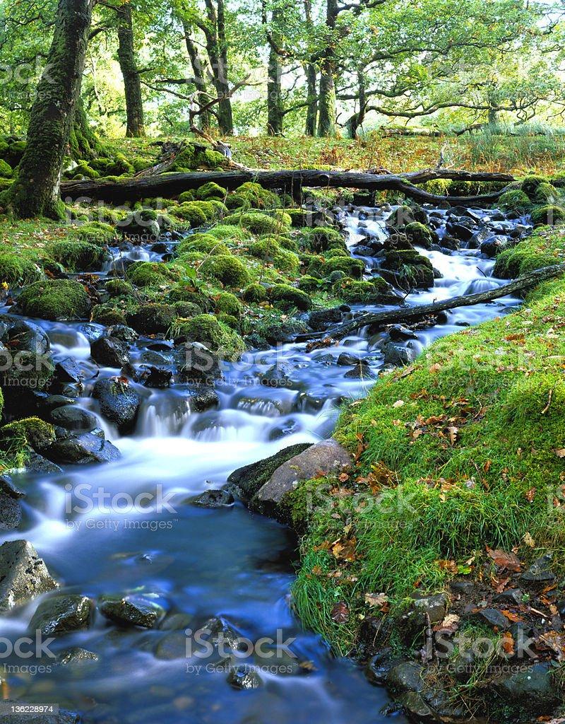 (XXXL+) Woodland stream royalty-free stock photo