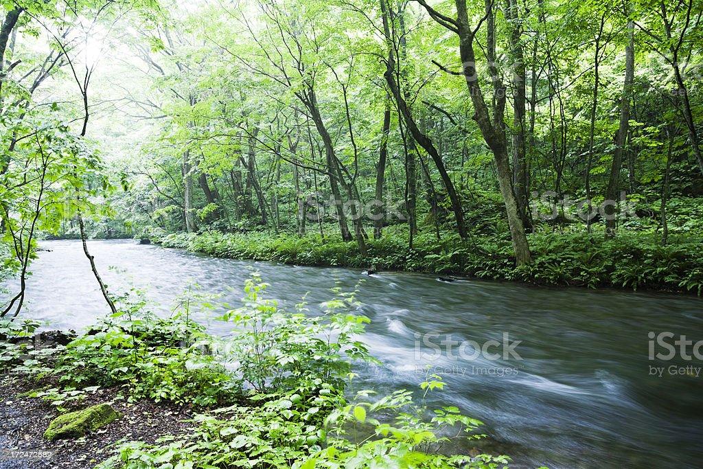 Woodland Stream royalty-free stock photo